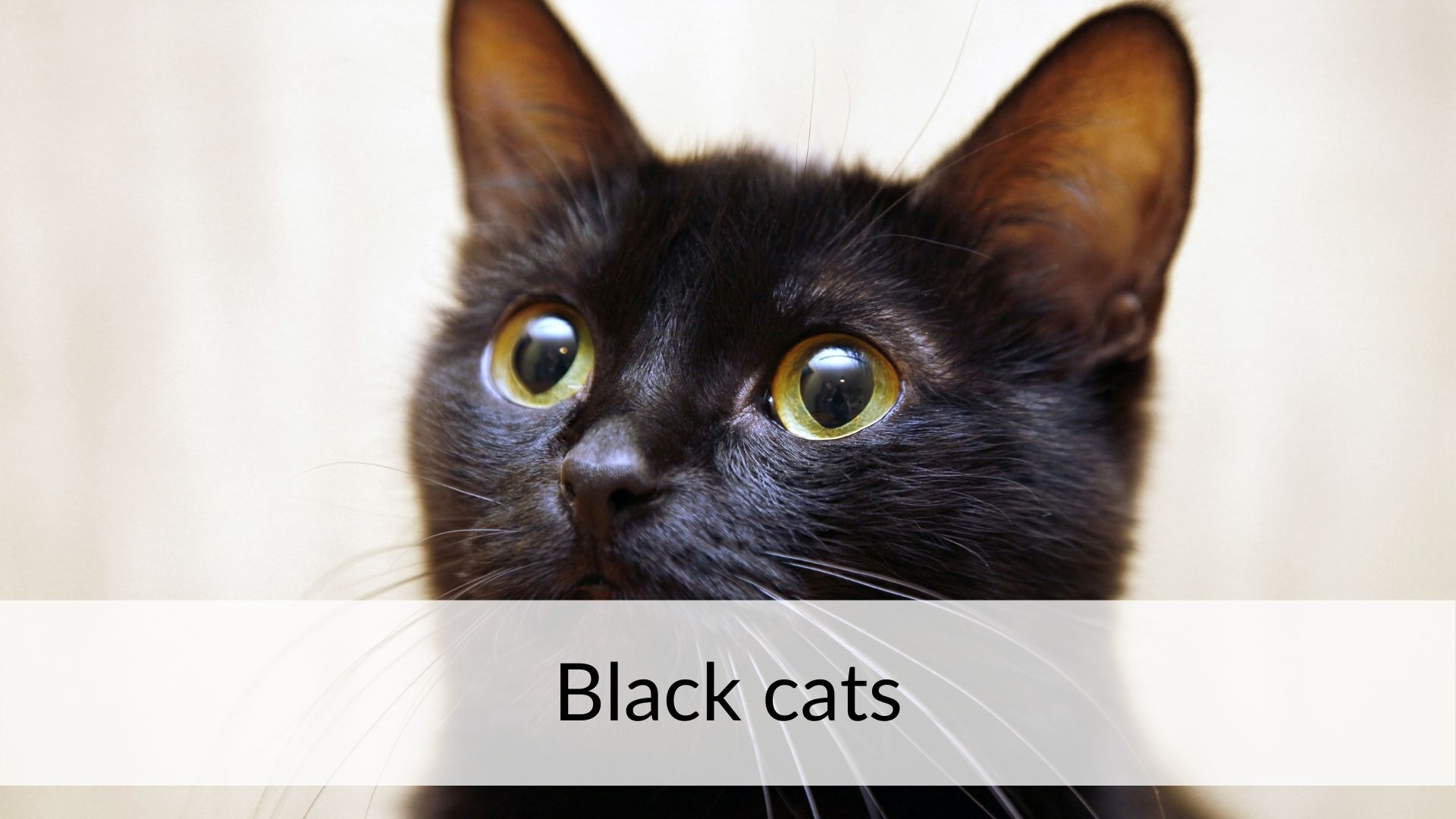 black cats superstitions