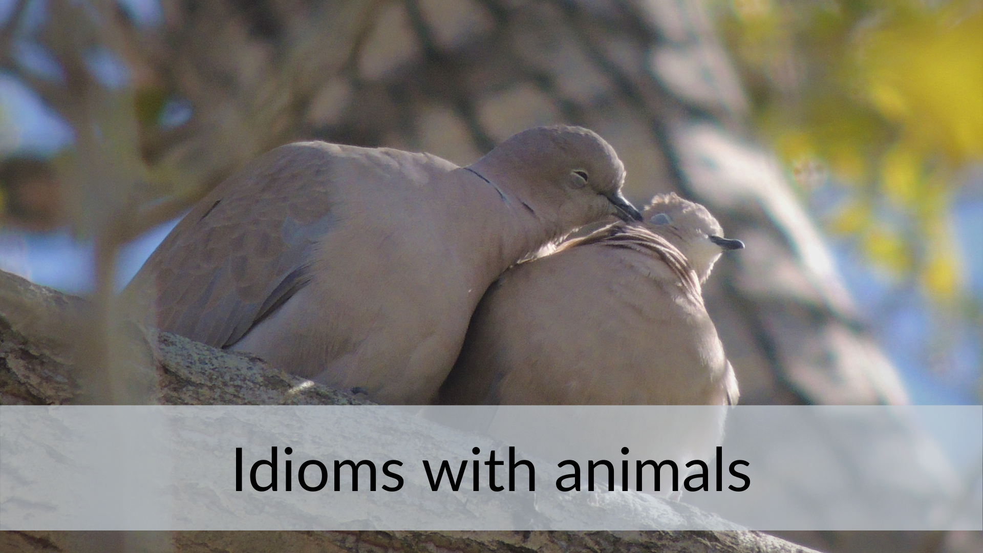 idioms, animals love